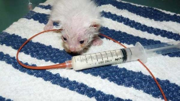 1409557540319 stuart little4 Poor Kittens! This story would melt your heart