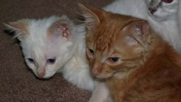 1409557541596 stuart little15 Poor Kittens! This story would melt your heart