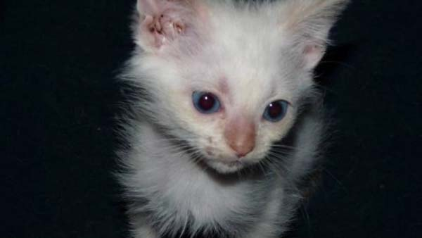 14095575416501 stuart little14 Poor Kittens! This story would melt your heart