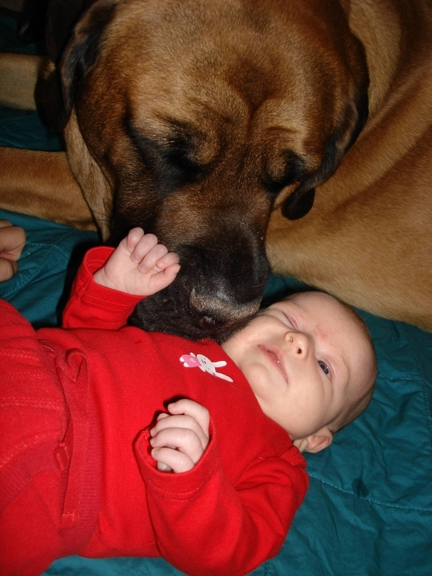 14095579613342 babies meeting dogs 04 Here Are 15 Pictures That Prove Its The Simplest Moments That Mean The Most. Heart = Exploded.