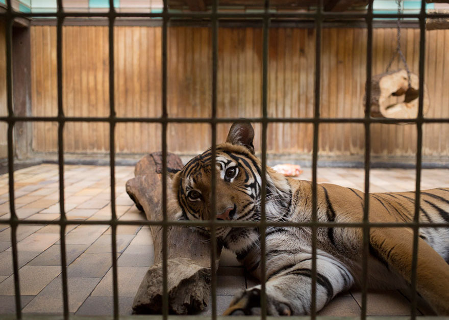 14095581275549 Lost Behind Bars Photos Zoo Animals Elias Hassos 13 Do zoo animals need to be kept behind bars?  A matter to think about!