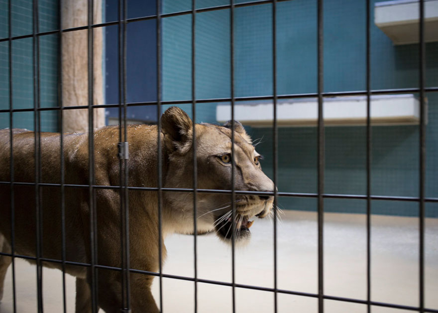 14095581356391 Lost Behind Bars Photos Zoo Animals Elias Hassos 15 Do zoo animals need to be kept behind bars?  A matter to think about!