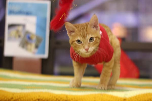 14095584372786 stockings7 Kitten Born With Backward Legs. These Images will Definitely Make You Emotional!
