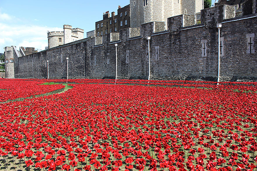 14095593248190 ceramic poppies first world war installation london tower 2 888,246 Poppies Pour Like Blood From The Tower Of London To Remember The Fallen Soldiers Of WWI