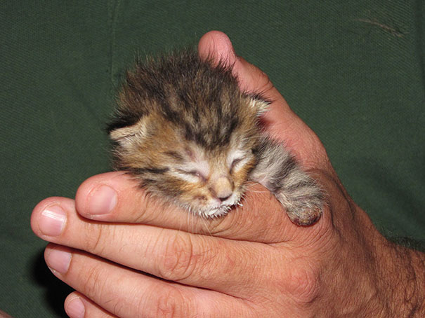 14095616977752 mercury two legged kitten 15 Handicapped yet so full of life. This kitten will definitely inspire you!!