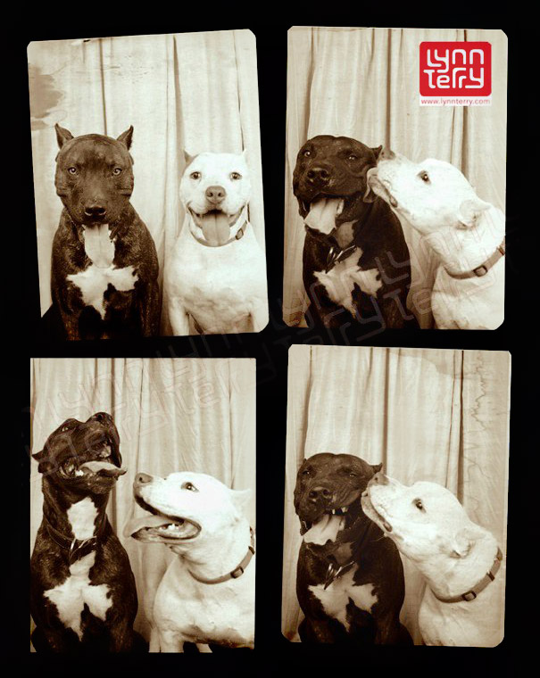 dogs photo booth 2 A Woman Put Dogs In A Photo Booth. What Happened Next Is The Cutest Thing Ever!