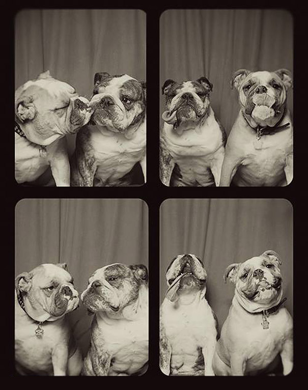 dogs photo booth 4 A Woman Put Dogs In A Photo Booth. What Happened Next Is The Cutest Thing Ever!