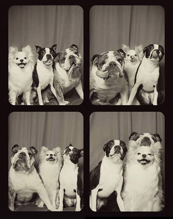 dogs photo booth 5 A Woman Put Dogs In A Photo Booth. What Happened Next Is The Cutest Thing Ever!