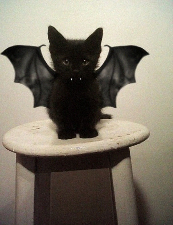 image50 10 Scariest Halloween Costumes For Your Pets..#10 will haunt you in your dreams!