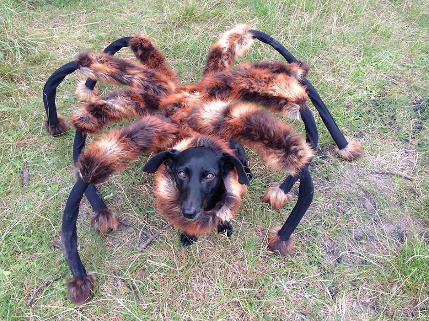 image52 10 Scariest Halloween Costumes For Your Pets..#10 will haunt you in your dreams!