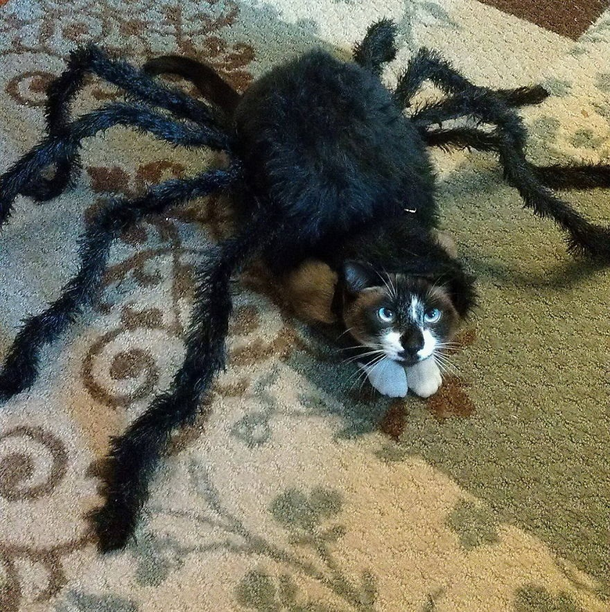 image53 10 Scariest Halloween Costumes For Your Pets..#10 will haunt you in your dreams!