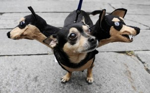 image61 303x189 10 Scariest Halloween Costumes For Your Pets..#10 will haunt you in your dreams!