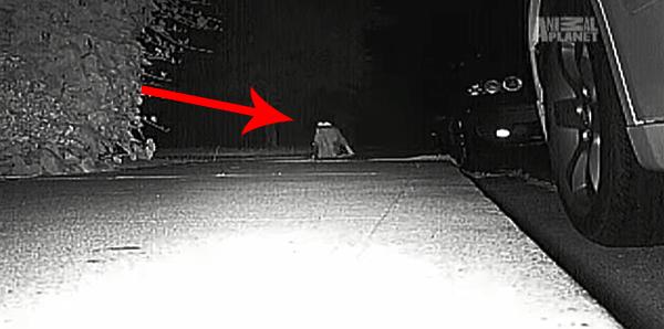 14154780613474 desktop 1406688950 Neighbors Kept Getting Items Stolen Until They Caught The Weird Culprit: A Cat.