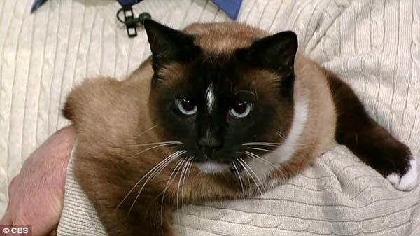 14154780627626 desktop 1406688952 Neighbors Kept Getting Items Stolen Until They Caught The Weird Culprit: A Cat.