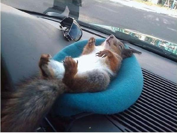 14155469737615 officer squirrel3 A Dying Squirrel Gets Help From a Kind Warrant Officer