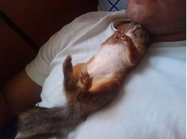 14155469748286 officer squirrel8 A Dying Squirrel Gets Help From a Kind Warrant Officer