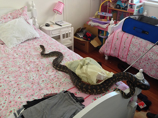 14155471838800 desktop 1412136359 This Snake Surprise Is The Opposite Of What Anyone Would Want. Oh, My. NOPE.