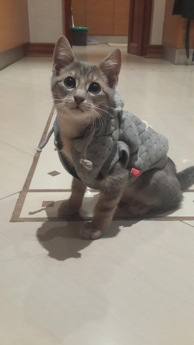 desktop 1430237253 These 28 Pets Are Totally Killing It In The Latest Spring Fashion Trends
