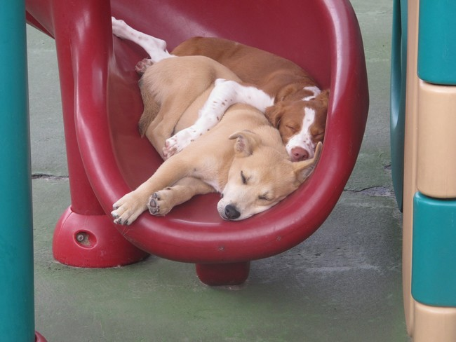 desktop 1442425396 The 21 Animals That Know The Truth About Life Is By Playing Hard And Sleeping Harder