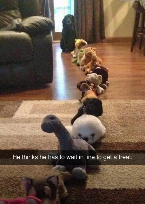 desktop 1442499666 22 Hilarious Snapchat Moments Of Dogs and Cats That Will Make You Faint With Laughter