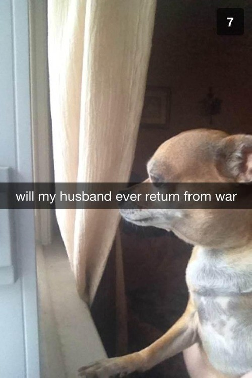 desktop 1442500780 22 Hilarious Snapchat Moments Of Dogs and Cats That Will Make You Faint With Laughter