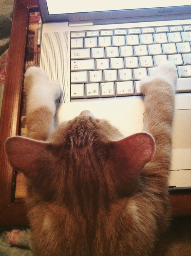 desktop 1443106984 These 20 Adorable Cats Dont Seem To Know Where To Sleep