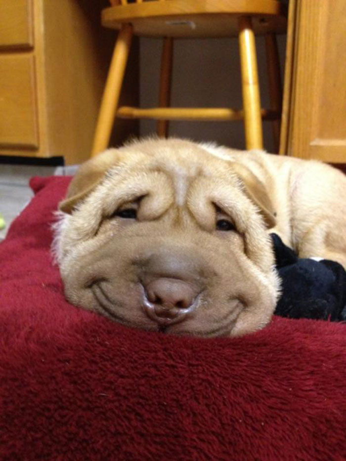 post the happiest dogs who show the best smiles 18  700 Top 20  Happiest Dogs Showing Their Best Smiles