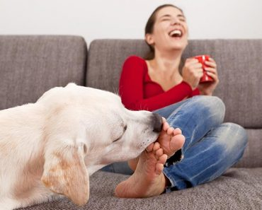 Why does my dog lick my legs?