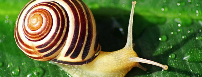Are snails born with shells?