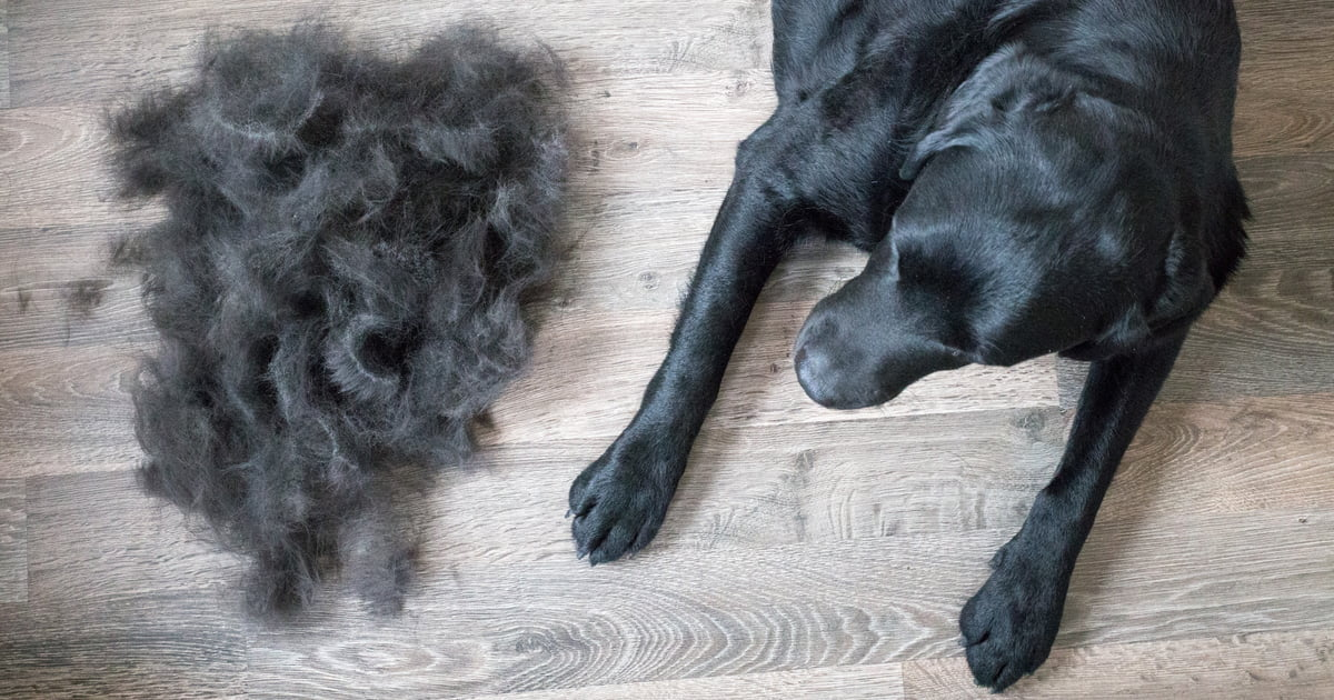 Whats the difference between hair and fur Whats the difference between hair and fur?