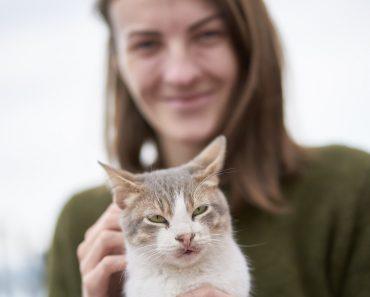 Why do cats like earwax